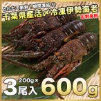 活〆お刺身用冷凍伊勢海老600g(200g×3尾)〔送料無料〕5種類のカラーレシピ・保存方法付 動きませんのでラクラク調理