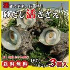 活さざえ450g(150g×3個)〔海水入〕〔送料無料〕5種類のカラーレシピと保存方法付です。