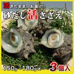 活さざえ450g(150〜180g×3個)〔海水入〕〔送料無料〕5種類のカラーレシピと保存方法付です。