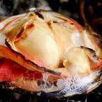 水揚げ日本一の北海道苫小牧産 活ほっき貝(ホッキ 北寄) 2kg (6〜8玉)
