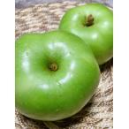 【今年も販売開始します!】大人気 調理用りんごブラムリー3kgアップ 青りんご フルーツジュレ りんごケーキに最適! 珍しい品種 小布施 信州 長野県