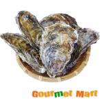 マルえもん[2Lサイズ]10個セット 北海道産 牡蠣 カキ 殻付き 生食 母の日 ギフト 送料無料