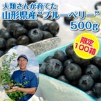 【限定100箱】大類さんが育てた ブルーベリー 送料無料 山形県産 500g(500g×1P)完熟