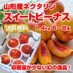 ギフト ネクタリン スイートビーナス 1.4kg(6-8玉) 山形産 桃 もも お試し 産地直送 お取り寄せ