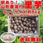 【訳あり】 里芋 訳有り 送料無料 山形県産 お徳用 5kg(S〜Lサイズ) 泥付き