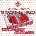 【新商品】送料無料 宮城県産 ミガキイチゴ 2L(320g×2パック)