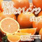 送料無料 国産 清美オレンジ 5kg