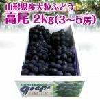 【限定50箱】ギフト ぶどう 送料無料 山形県産 大粒 高尾 2kg(3-5房) 葡萄 種なし