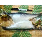鯡魚 - 丸干し子持ちニシン 北海道産2尾入り にしん 鰊 ニシン にしん
