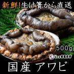 アワビ 500g 国産 鮑 新鮮 千葉県産 あわび 魚介類