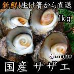 サザエ 1kg 千葉県産 新鮮 国産 さざえ 栄螺