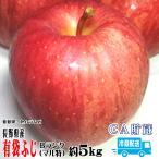 ギフト りんご 有袋ふじ 約5kg Bランク マル特 長野県産 CA貯蔵 送料無料 クール便配送 フルーツリンゴ信州