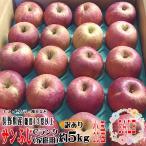 送料無料 [CA貯蔵]  サンふじ  Cランク(家庭用)  約5kg (小玉限定 20玉) 長野産 りんご  糖度13度以上 訳あり