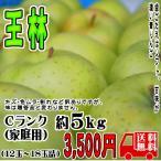 [送料無料]  王林 Cランク(家庭用)約5kg  長野産 りんご [CA貯蔵] (12玉〜18玉) 訳あり