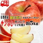 ギフト りんご サンふじ 約5kg Bランク マル特 糖度13度以上 長野県産 CA貯蔵 送料無料 フルーツ リンゴ 信州