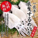 するめいか 干物/一夜干し (石川県産 生原料使用) 大×10枚