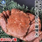 北海道産 浜茹で毛ガニ 1杯約800g 超特大サイズ 最上級品 お歳暮