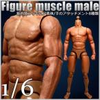 筋肉質 フィギュア 素体 フィギュア 男性素体 筋肉 男性ボディ 1/6スケール 1/6 ヘッドレス 可動 ポーズ ポージング