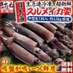 イカ いか 生 解凍後に吸盤が吸いつく鮮度 日本海産 生スルメイカ姿7ハイ 約1.5kg お刺し身 刺身 冷凍便 送料無料