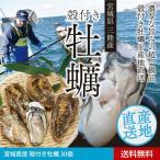 送料無料 宮城県産 殻付き牡蠣30個