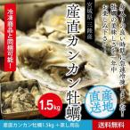 送料無料 三陸産地直送 旬の時期に急速冷凍したカンカン牡蠣1,5kg