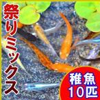 (メダカ)祭りミックスめだか 稚魚 SS-Sサイズ 10匹セット