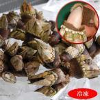 Shellfish - 亀の手(カメノテ)(冷凍)小中サイズ 約500g (山陰浜坂港産) ペルセベス