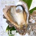 天然岩牡蠣(生)中大 5個 (山陰沖産)(いわがき、イワカキ、いわかき、岩がき、岩ガキ)
