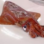 (送料無料)赤いか(生)1杯 約10.0-10.9kg(浜坂産)捌いてお届け(赤イカ・アカイカ・ソデイカ、タルイカ・烏賊)