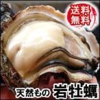 (送料無料セール)天然岩牡蠣(生)大サイズ 7個[生食可] (山陰沖産) (いわがき、イワカキ、いわかき、岩がき、岩ガキ)