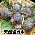天然岩牡蠣(生)中 5個 (生食可)(山陰沖産)(かき、カキ、イワガキ、いわがき、イワカキ、いわかき、岩がき、岩ガキ)