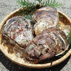 天然岩牡蠣(生)大 3個 (山陰沖産)(いわがき、イワカキ、いわかき、岩がき、岩ガキ)