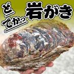 めったにないでかサイズ!ドでか!ボンベ牡蠣(天然岩牡蠣)超ビッグサイズ 2個[生食用](鳥取県産)