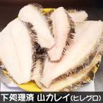 送料無料 下処理済・山カレイ(冷凍)大きめサイズ 約800g (山陰浜坂産)煮ても、揚げても美味しいお魚。(ベランス、ベラカレイ、ヒレグロ、かれい)