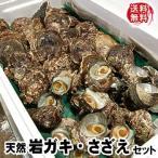 (送料無料)山陰の「岩がき・さざえ」天然もの詰合せ 各17個入(生食可) サザエは砂抜き済みのものを出荷します (岩牡蠣、岩かき、岩ガキ)
