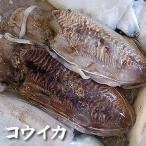 コウイカ(冷凍) 1杯 約400-499g (浜坂産) (甲いか・ハリイカ・スミイカ・烏賊)(墨いか・墨イカ・針いか・針イカ・甲イカ)