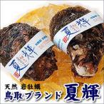 鳥取県ブランド 天然岩牡蠣 夏輝(なつき・ナツキ) 超デカデカサイズ 3個  (生食可)
