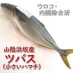 ツバス(ハマチ)(生冷凍・調理済み) 1尾 約250-299g(調理前重さ) (浜坂産)