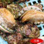 (セール)天然とこぶし(冷凍) 約200g(7-9個前後入) 大小混ざり (山陰浜坂産) (トコブシ、床伏、流れ子、ながらめ、貝)