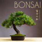 盆栽 松 アレンジ盆栽 富士の松 フェイクグリーン インテリアグリーン 人工観葉植物 造花 送料無料