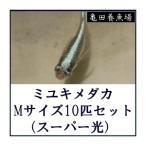 ミユキメダカ Mサイズ15匹セット(スーパー光)