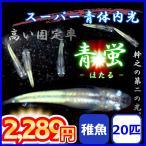 メダカ/青蛍めだか 強体内光めだか 稚魚20匹