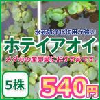 メダカ/ホテイアオイ/ホテイ草 5株 ホテアオイ/浮草