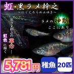 メダカ/虹・黒ラメ幹之メダカ 稚魚20匹