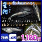 メダカ/星河 青ラメ幹之めだか 稚魚10匹