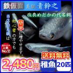 送料無料/鉄仮面系統 青幹之めだか 稚魚20匹セット/ メダカ
