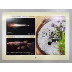 日本メダカ協会カレンダー 2020年