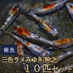 medakastory_sanshokuramemiss10