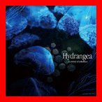Hydrangea [CD] a crowd of rebellion