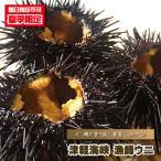 【業務用】津軽海峡 漁師ウニ(殻付き)